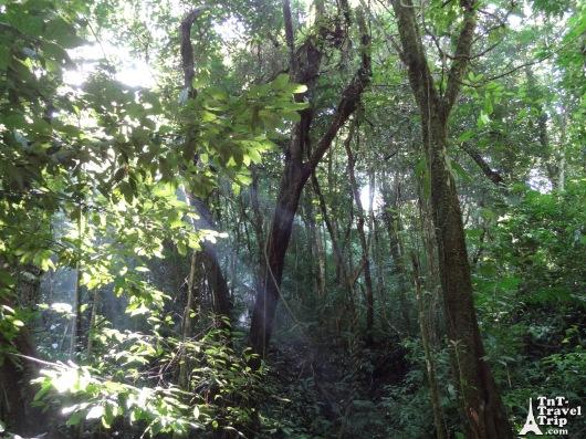 Palenque 04